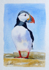 "5"" x 7"" watercolour of a cute wee Puffin"